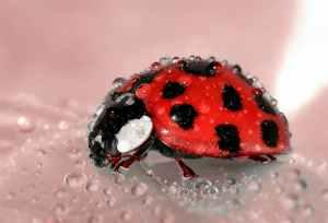 ladybug-beetle-insect-lucky-charm.jpg